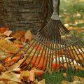 Rateau-en-automne