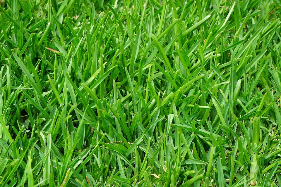 Entretenir sa pelouse : comment faire ?