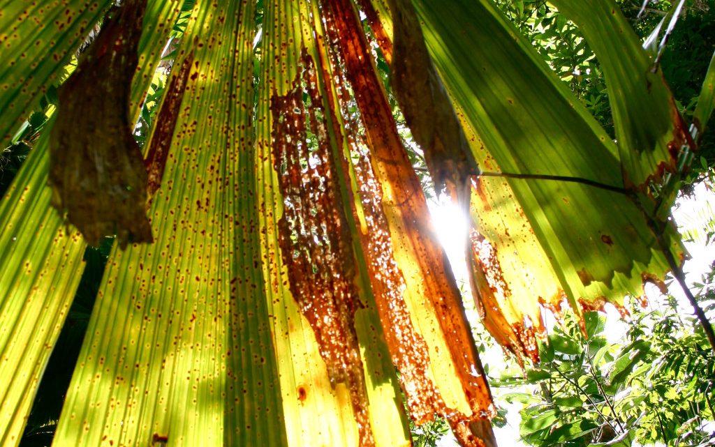 Adoptez un palmier artificiel et créez votre univers paradisiaque